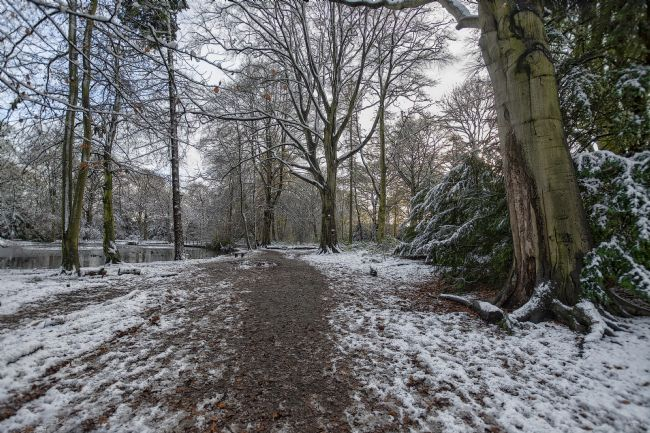 Simon Hark |  Apley Woods