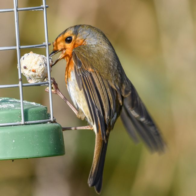 Mike Carroll | Thieving Robin