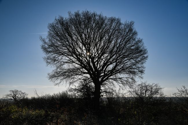 Mike Carroll | Winter tree silhouette