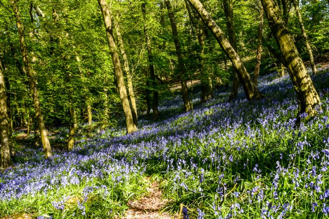 Mike Carroll | Bluebell time