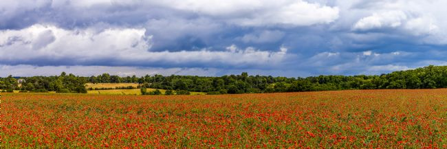 Mike Carroll | Poppy Panorama