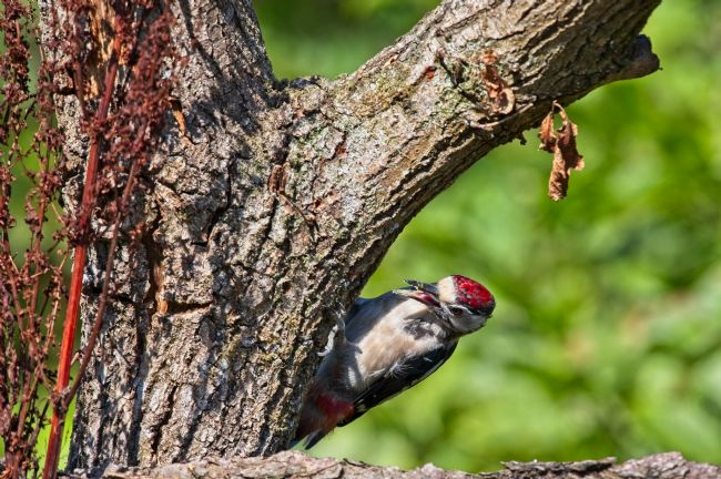 Simon Rigby | Woodpecker