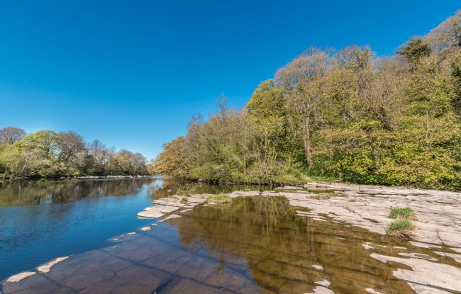 Richard Laidler | River Tees North Side at Whorlton in Spring Sun