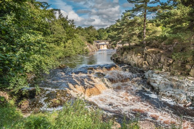 Richard Laidler | Summer Morning at Low Force Waterfall, Teesdale