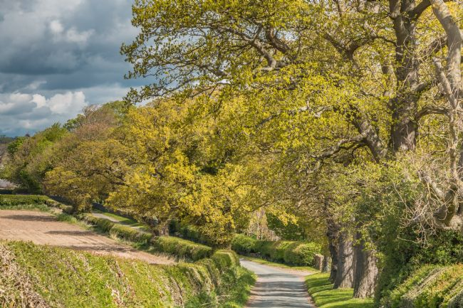 Richard Laidler | Spring Oaks at Thorpe, Teesdale