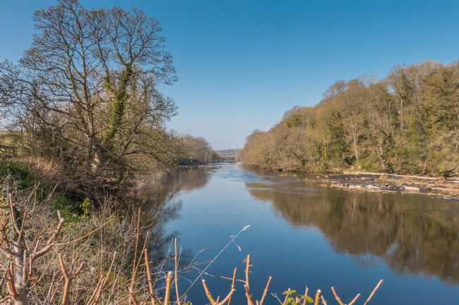 Richard Laidler | The River Tees at Wycliiffe, Teesdale in Early Spring