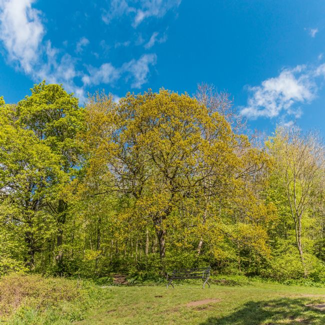 Richard Laidler | Spring at Flatts Woods, Barnard CAstle, Teesdale