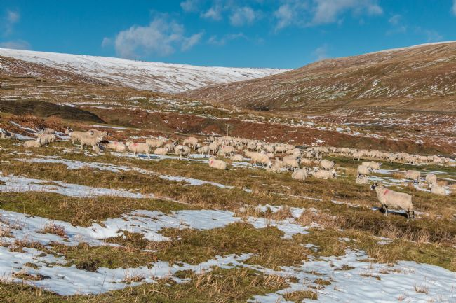 Richard Laidler | Winter in the Hudes Hope Valley