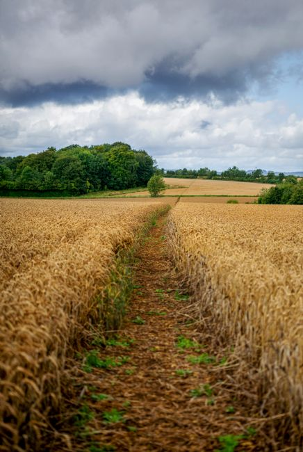 scott Mattock | Footpath through the fields