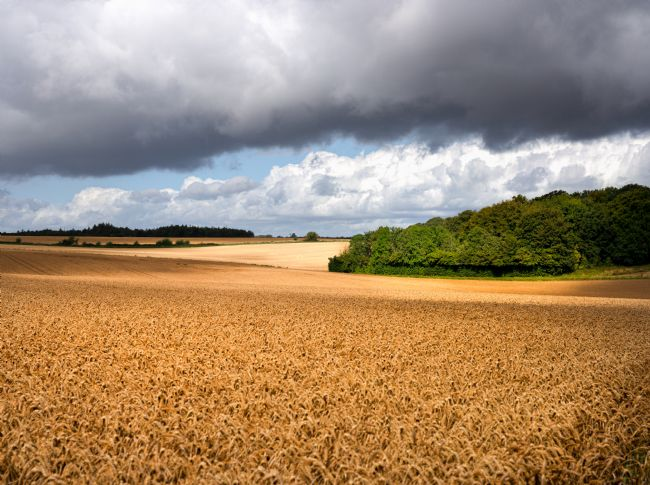 scott Mattock | Field with sun on a stormy day in Cotswolds
