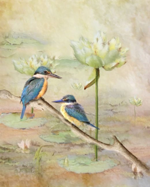 Trudi Simmonds |  Sacred Kingfisher