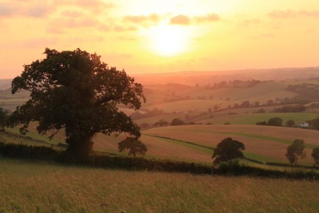 Heather Coleman | Midsummer Sunset from Raddon Hills, Devon