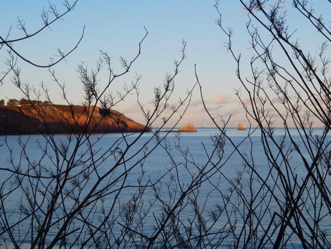Heather Coleman | Berry Head coast through the tree's