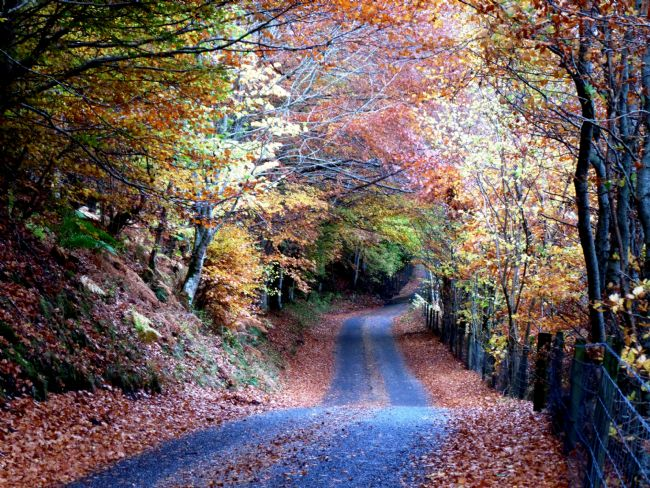 yvonne carroll | Glen Lyon in Autumn - the road through the trees