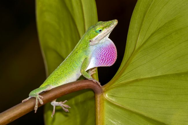 kelvin rumsby | anole 3