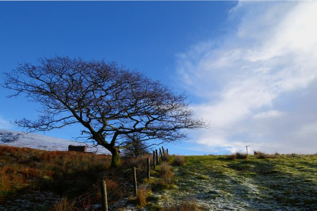 James Brunker | Winter Oak Tree in Upper Ogmore Valley South Wales