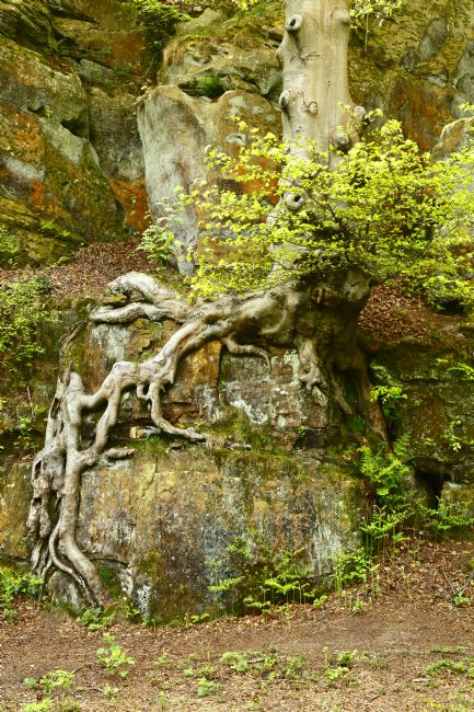 James Brunker | Beech Tree and Sandstone Rocks Rusthall Kent