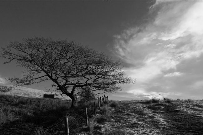 James Brunker | Winter Oak Tree in Black and White South Wales