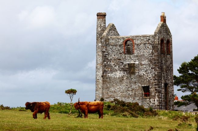 James Brunker | Highland Cattle and Minions Visitor Centre Cornwall