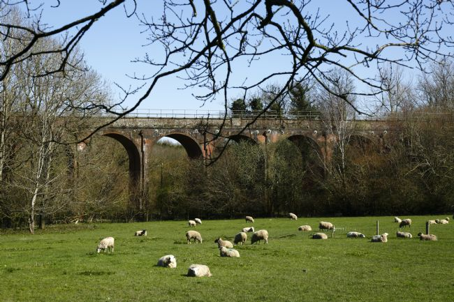 James Brunker | Colebrook Viaduct and Grazing Sheep Kent