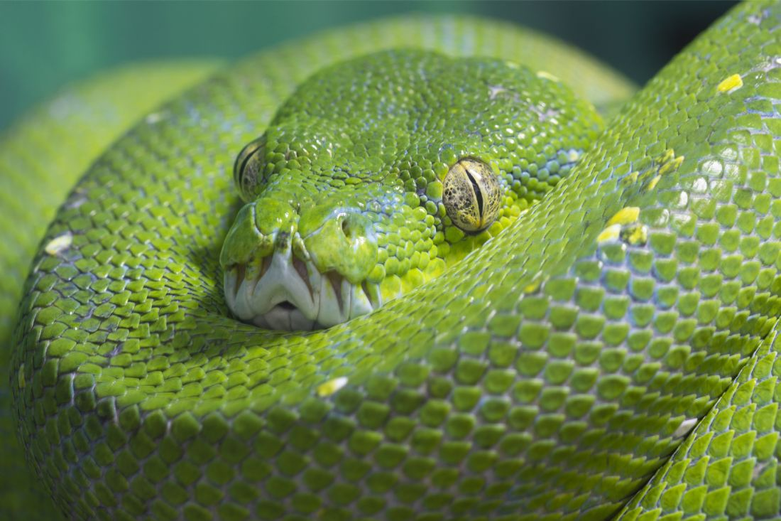 Ball Python Crossing Sign NEW 12X12 Metal Snake Reptile Royal Python