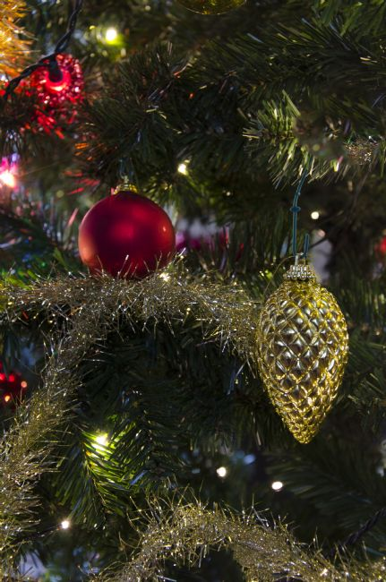 Steve Stamford | Christmas tree decorated
