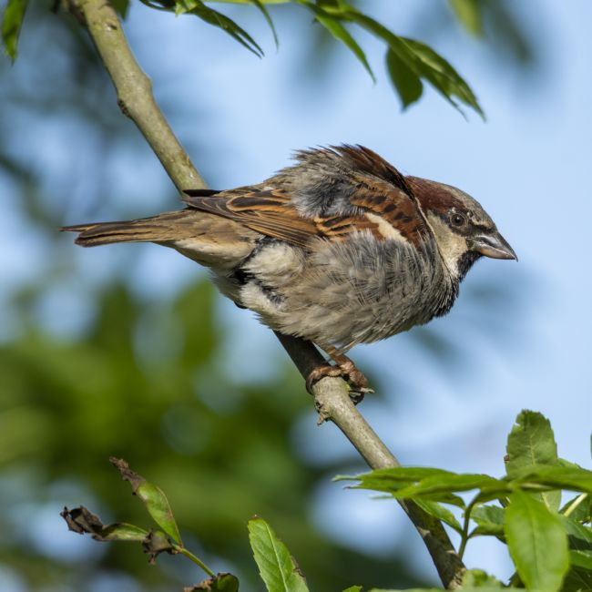 Steve Stamford | Young house sparrow