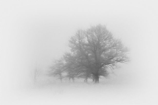Mary Fletcher | Trees in the Mist