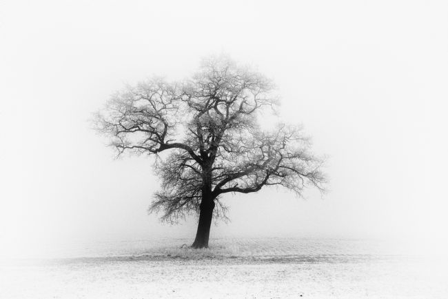 Mary Fletcher | Frosty Oak