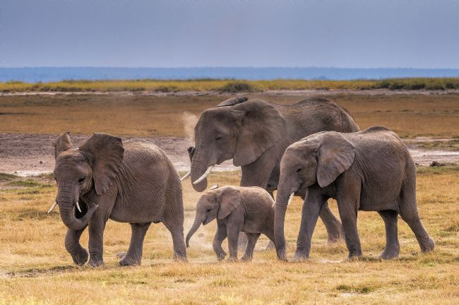 Mary Fletcher | Elephant Family