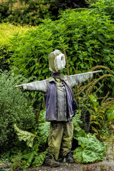 Mary Fletcher | Scarecrow