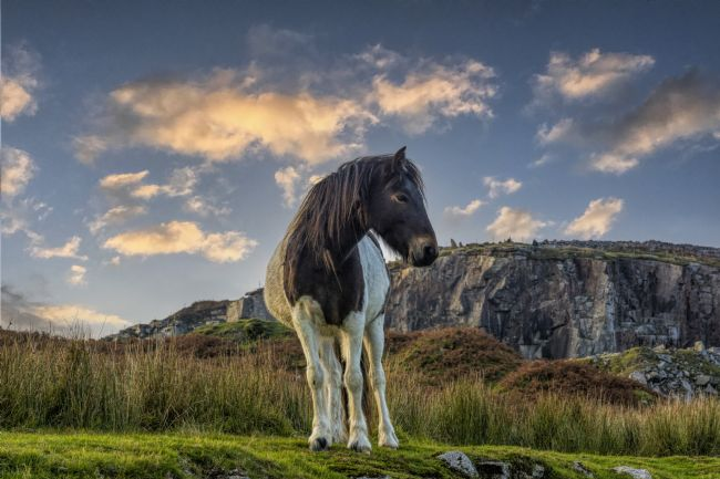 Mary Fletcher | Wild Pony on Bodmin Moor