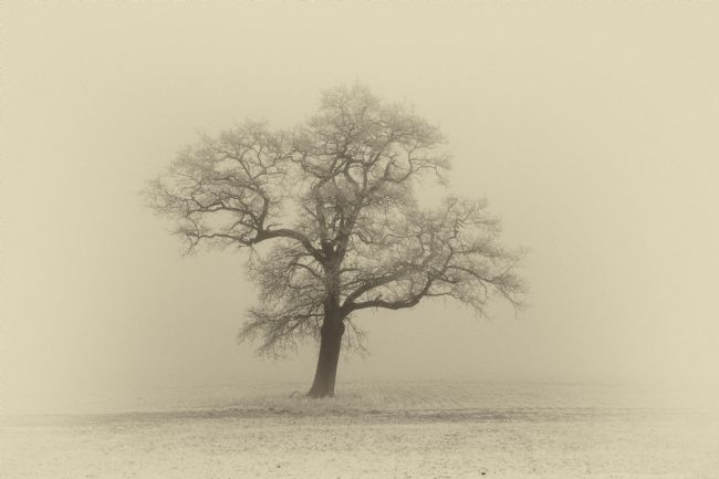 Mary Fletcher | Frosty Oak Sepia