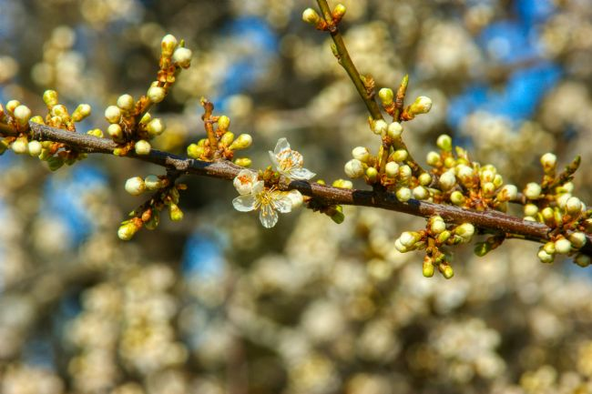 Chris Langley | First Day of Spring - Flowering Trees