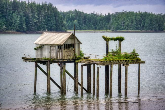 Chris Langley | Port Edward, British Columbia - Nature Reclaims