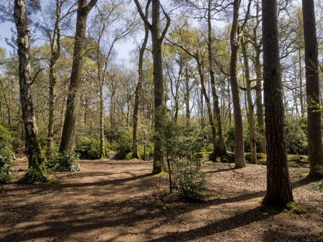 Jay Lethbridge | Sunshine through the Trees at Stover Country Park