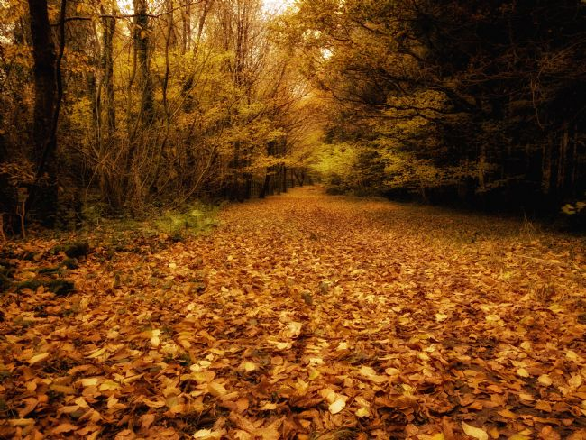 Jay Lethbridge | Carpet of Autumn at Stover