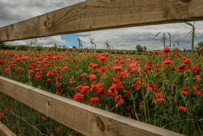 Jacovos Jacovou | More than just a splash of Poppies