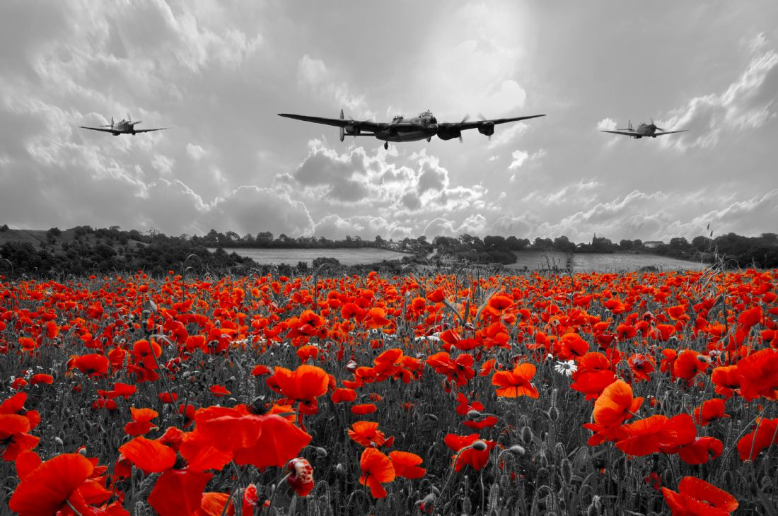 James Biggadike | Poppy Flypast
