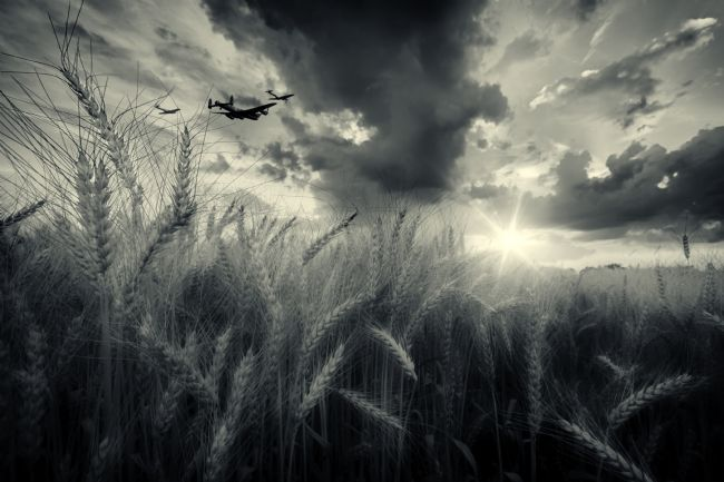 James Biggadike | BBMF Harvest - Mono