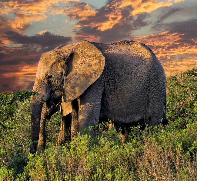 Lynn Bolt | Elephants at Sunset