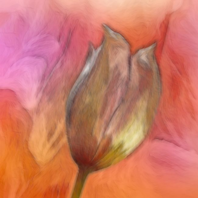 Lynn Bolt | Abstract Clematis Bud